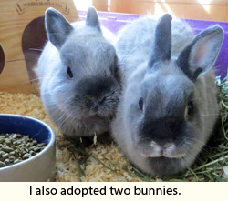 about-bunnies1